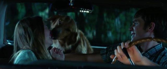 Dojemný příběh psa, který chtěl pomáhat lidem.